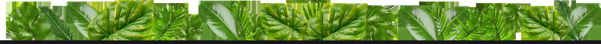 banda-hojas